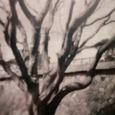 HOLGA写真/黒い木